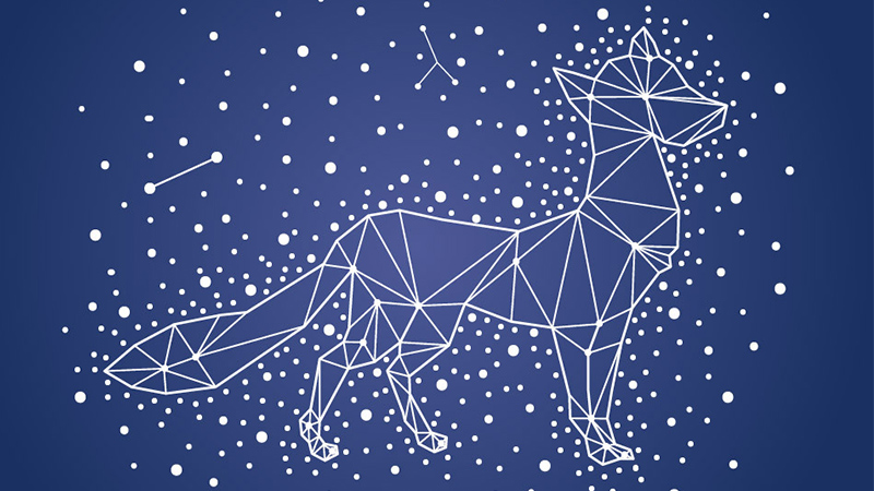 Fox Constellation for Dungeons & Dragons Fifth Edition