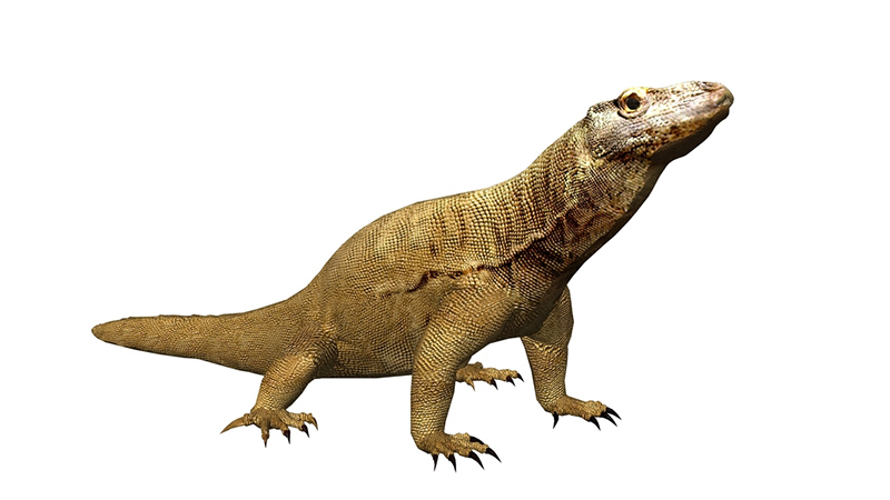 Komodo Dragons for Dungeons & Dragons Fifth Edition