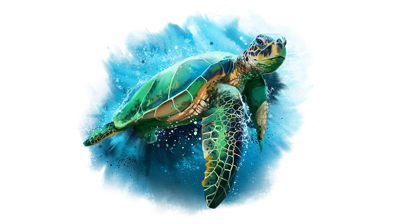 Sea Turtles for Dungeons & Dragons Fifth Edition