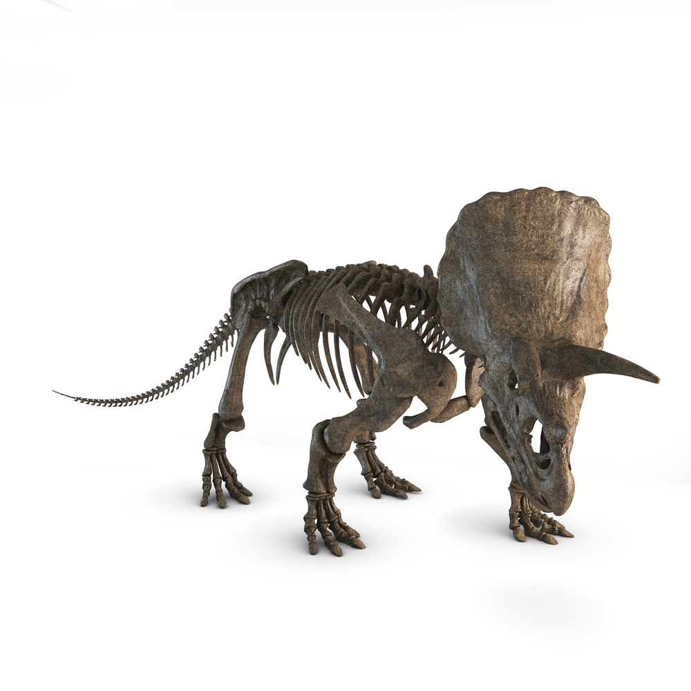 Triceratops Skeleton | New Monster for Fifth Edition