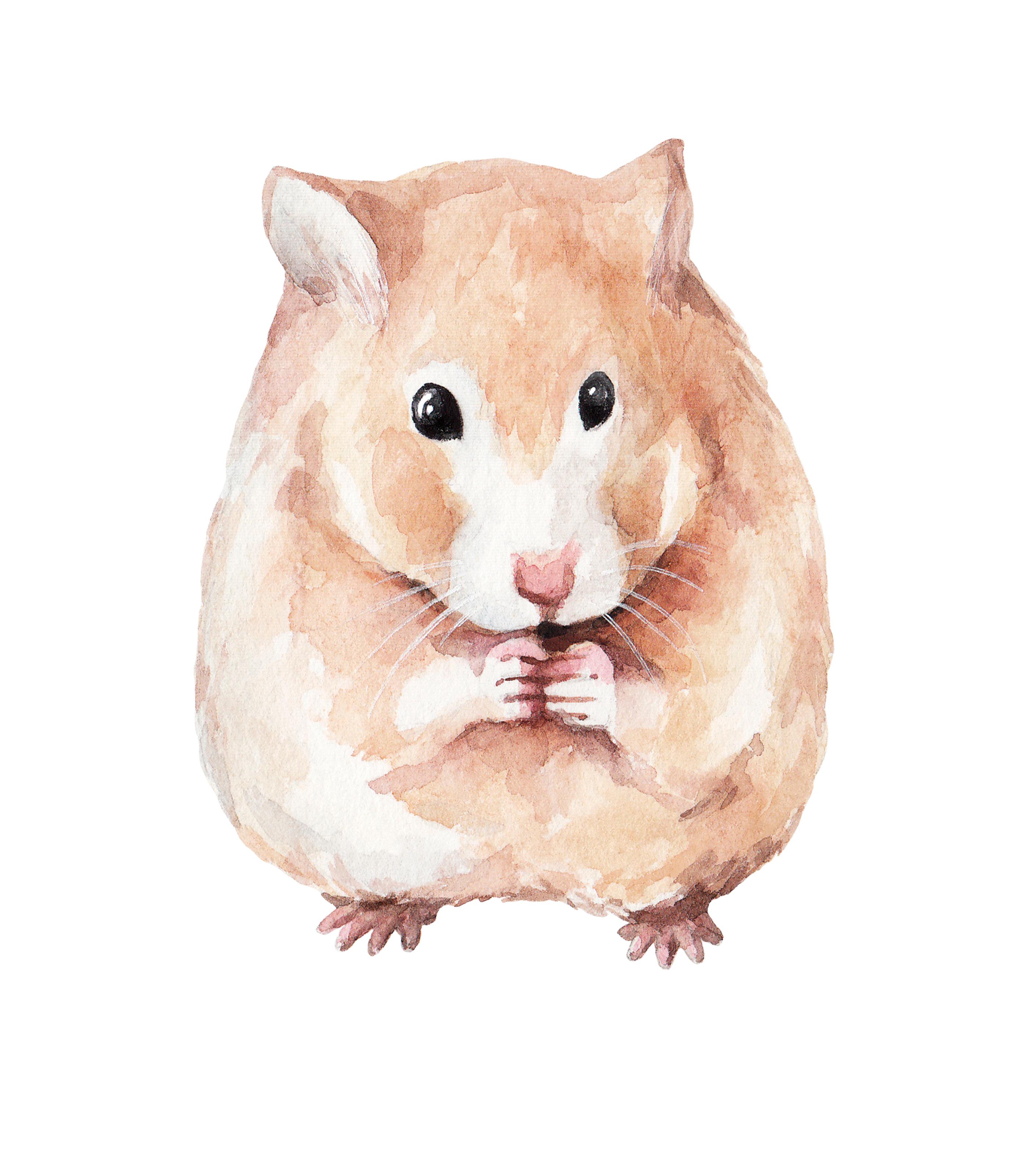 Gargantuan Hamster   New Monster for Fifth Edition