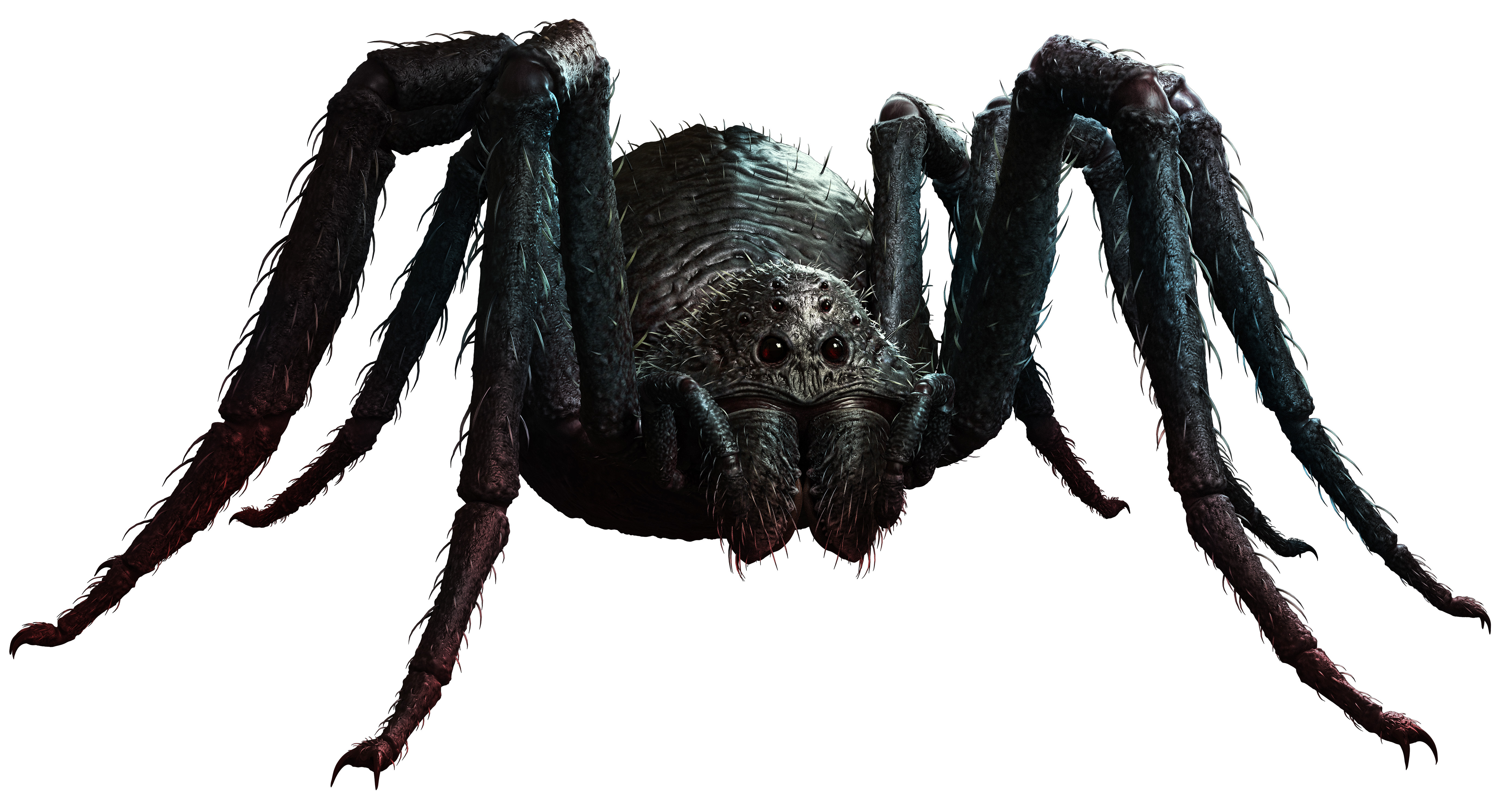 Flying Spider   New Monster for Fifth Edition (366 Days of Monsters)